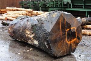 Holzstamm01-600x400