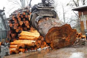Holzstamm02-600x400