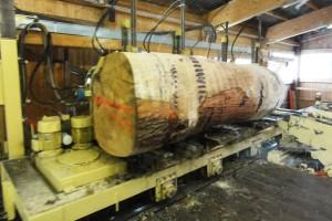 Holzstamm04-600x400